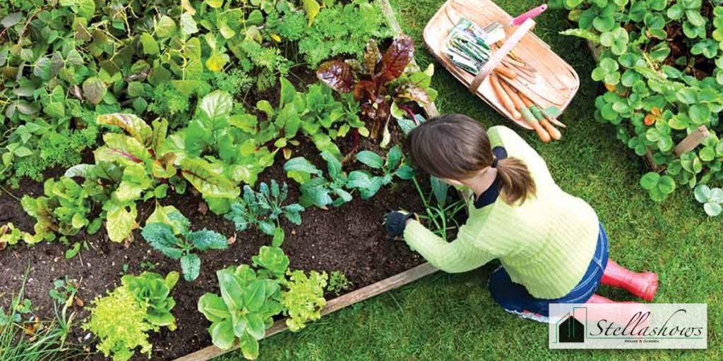 5 ผักสวนครัวที่ควรปลูกอย่างยิ่งในสวนหลังบ้าน