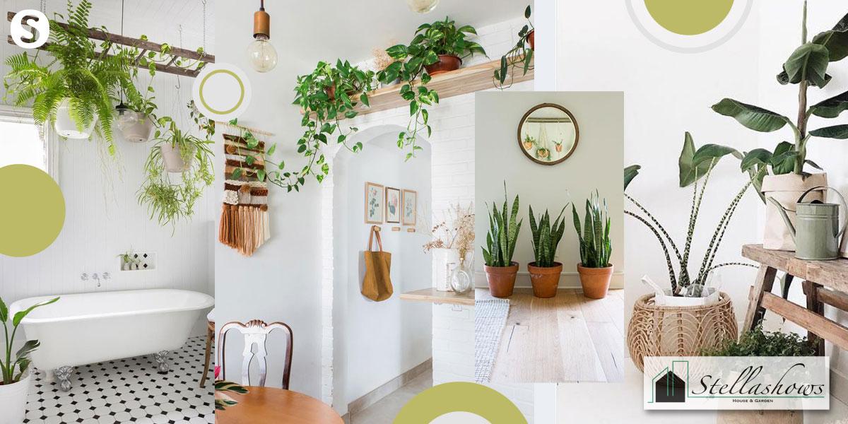 10 ต้นไม้ปลูกในบ้าน สวยได้ง่าย ยกระดับบ้านให้น่าอยู่ยิ่งขึ้น