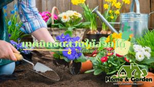 เทคนิคจัดสวนให้สวยได้แม้ไม่มีเวลาดูแล อย่างที่ทราบกันดีว่า การจัดสวน ให้สวยงามนั้น ไม่เพียงแต่ต้องรู้ขั้นตอน หรือเทคนิคในการจัดสรรพื้น
