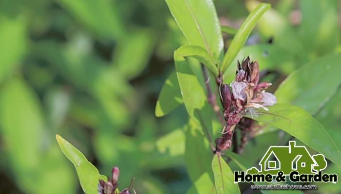 ต้นไม้ที่ปลูกในบ้านแล้วดีแถมมีสรรพคุณทางยา การปลูกต้นไม้ ไว้ในบริเวณถือว่าเป็นตัวช่วยเพิ่มพื้นที่สีเขียวให้บ้านของเราน่าอยู่มากขึ้น