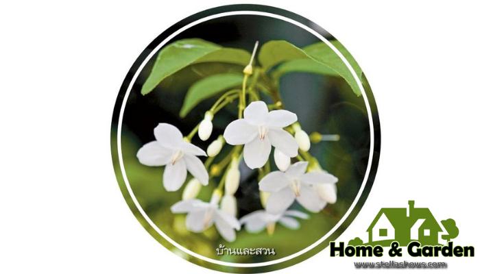 รวมไม้ดอกที่เหมาะสำหรับมือใหม่หัดปลูก การปลูกไม้ดอกเป็นตัวช่วยที่จะทำให้บ้านของเราดูร่มรื่นมากที่สุดแต่คนบางส่วนปลูกไม้ดอกแล้วไม่เติบโต