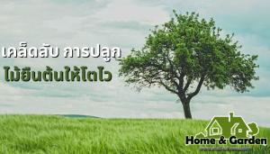 5 เคล็ดลับปลูกไม้ยืนต้นให้โตไว คูณ 2 ไม้ยืนต้นเป็นต้นไม้ที่มีลำต้นขนาดใหญ่สามารถเจริญเติบโตได้เรื่อยๆหากได้รับอาหารหรือได้รับการดูแลที่ดี