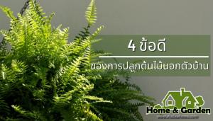 4 ข้อดีของการปลูกต้นไม้นอกตัวบ้าน ต้นไม้นั้นนอกจากจะมีประโยชน์แล้วยังช่วยในเรื่องของจิตใจอีกด้วย ข้อดีของการปลูกต้นไม้นอกตัวบ้าน