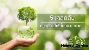 5 เคล็ดลับปลูกต้นไม้ให้มั่นคง ทนทาน ไม่ต้องตัดแต่งบ่อย การปลูกต้นไม้นั้นนอกจากจะช่วยให้จิตใจสงบสุข ยังช่วยในเรื่องของบรรยากาศดีขึ้นอีกด้วย