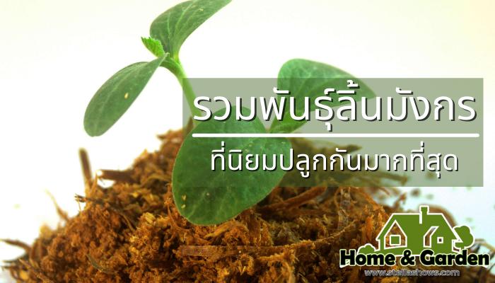 รวมพันธุ์ลิ้นมังกรที่นิยมปลูกกันมากที่สุด ต้นลิ้นมังกรจัดว่าเป็นไม้ประดับยอดนิยมที่คนไทยส่วนใหญ่นิยมปลูกกันมากที่สุดไม้ชนิดนี้มีความทนทาน