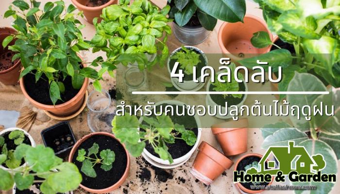 4 เคล็ดลับสุดปัง สำหรับคนชอบปลูกต้นไม้ฤดูฝน หลายคนมองหาต้นไม้มาทำการปลูกในบ้านเพื่อความสวยงาม อีกทั้งยังช่วยในเรื่องของอากาศถ่ายเท