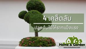 4 เคล็ดลับปลูกต้นไม้อย่างไรให้รากคงทนแข็งแรง ในการปลูกต้นไม้ นั้นทุกคนก็ต้องมีเคล็ดลับประจำตัวเองในการปลูกกันอยู่แล้วอย่างแน่นอน