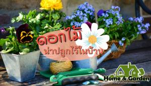 รวมดอกไม้สีสันสวยงามและน่าปลูกไว้ในบ้าน การปลูกดอกไม้ไว้บริเวณบ้านเป็นการช่วยเพิ่มพื้นที่สีเขียวให้บ้านของเราน่าอยู่เพิ่มสีสันให้ดูสวยงาม