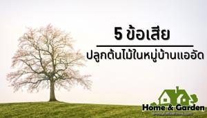 5 ข้อเสียสำหรับคนปลูกต้นไม้ในหมู่บ้านแออัด ยุคนี้เป็นยุคของการปลูกต้นไม้ ไม่ว่าจะเป็นไม้ยืนต้นกะทั่งไม้ดอกไม้ประดับที่ปลูกกันอย่างแพร่หลาย