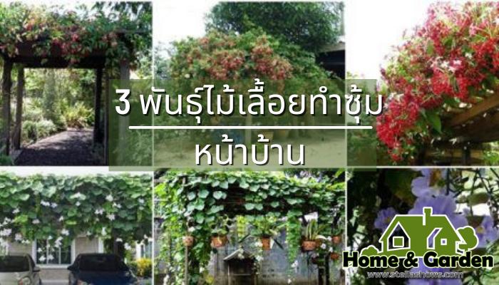 3 พันธุ์ไม้เลื้อยทำซุ้มหน้าบ้าน อากาศร้อน แดดแรงแบบนี้ ลองเปลี่ยนจากประตูรั้วหน้าบ้านธรรมดา ๆ มาเป็นซุ้มดอกไม้แบบฉบับไม้เลื้อยไว้บังแดดกัน