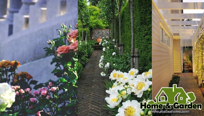 3 ไอเดียตกแต่งสวนหลังบ้านในพื้นที่แคบ สวนหลังบ้านที่เต็มไปด้วยต้นไม้สีเขียว และดอกไม้หลากสี นอกจากจะช่วยฟอกอากาศและให้ความสดชื่น