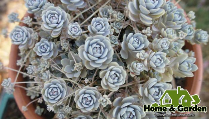 5 ไม้อวบน้ำเลี้ยงง่าย ไม้อวบน้ำหรือ Succulent เป็นพืชที่สามารถกักเก็บความชุ่มชื่นของน้ำไว้ในทุกส่วนของลำต้นลักษณะรูปร่างที่ถูกกักเก็บด้วยน้ำ