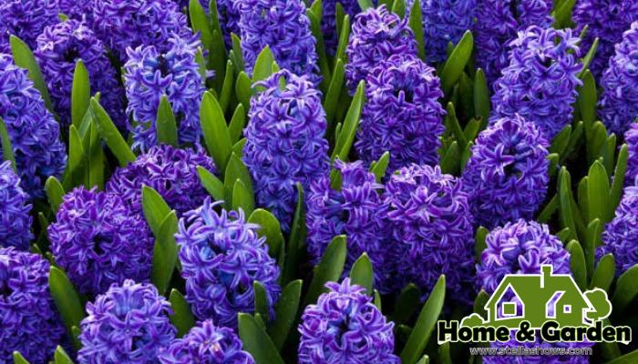 4 ดอกไม้แต่งสวนสีม่วง สำหรับเพื่อน ๆคนไหนที่ชื่นชอบการจัดสวน ตกแต่งสวนที่บ้าน ต้องห้ามพลาด 4 สายพันธุ์ดอกไม้ตกแต่งสวนสีม่วง